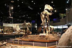 Seguindo os dinossauros do Canadá - Royal Tyrrel Museum
