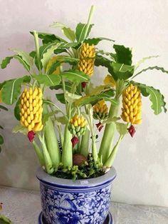 #bonsai-art #盆栽 #バナナ (Via: Crie seu Cantinho Verde com lindos Bonsais!  ) 工エエェェ(´д`)ェェエエ工 バナナの盆栽なんかあるんや...知らなんだ。 ちょっと、かわゆす(〃∇〃) 化粧砂には、K砂をよろしくお願いします。
