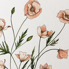 peach poppies because it snowed today and was cold and gloomy and I am so not ready for winter.