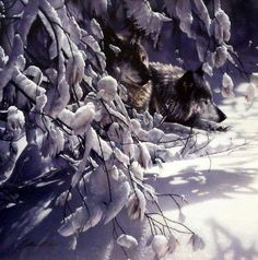 """One Wolf looking out as the other sleeps Image Size 18""""W x 18""""H Paper Size 18""""W x 18""""H"""