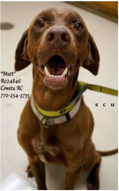 EXTREMELY URGENT! LAST CHANCE! THIS PET WILL BE EUTHANIZED WEDNESDAY 6-12-13!                                ~MUTT German Shorthaired Pointer, Lab Retr Mix Male, 3 Years, Weight: 55 lbs ID: A024846 Vaccinated, Heartworm POSITIVE (treatable) PLEASE CONTACT COWETA COUNTY ANIMAL CONTROL TO ADOPT THIS PET: 770-254-3735 The address is 91 Selt Road, Newnan, GA.