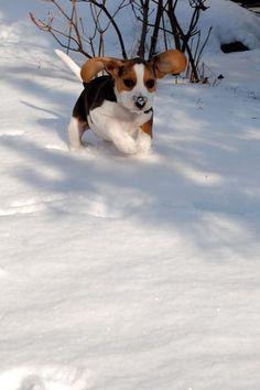 How adorable!!!! Just like my Daisy :-)