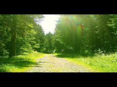 Relax musica, natura, boschi, cascate, montagne, musica rilassante e mel...