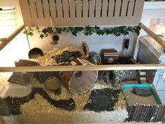Bildresultat för inredning hamsterbur