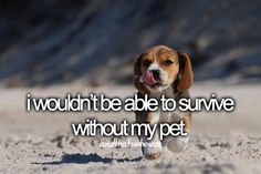 I have a beagle just like this one, and I adore him.Suggested bylivinyoungwildnfree96