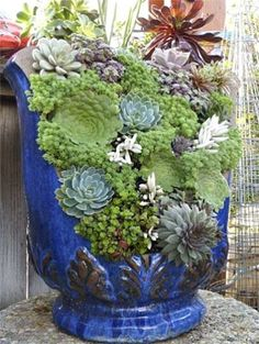 Don't throw out that broken POT yet! RECYCLE & fill with SUCCULENTS!