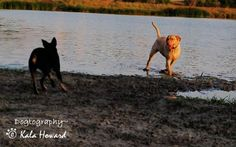 Dogtography~ © Kala Howard