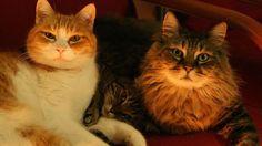 17 febbraio 2012 - Giornata nazionale del gatto #auguri #miao