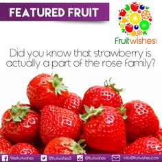 Did you know that Strawberry is not actually a berry but a part of the family of Rose Flower? It is because plants in the rose family mostly produce a dry seed, and there are some cases where the plant produces a false fruit. This occurrence is when the dry seed is enclosed with flesh that resembles a fleshy ovary, or fruit. Fruit is the result of the rose plants that do produce actual fleshy fruit around the seed. The strawberry is an inverted example of the dry seeds; the dry seeds stand… Fruit Fruit, Rose Family, Planting Roses, Seeds, Strawberry, Cases, Flower, Plants, Food