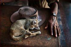 Steve mc curry - photographe