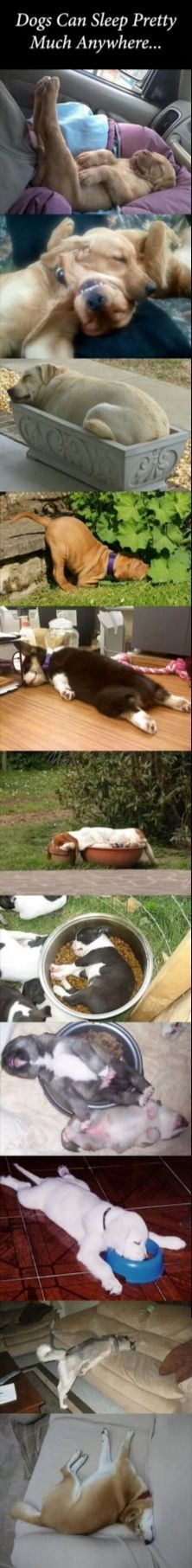 Dogs falling asleep in the funniest and cutest ways :)