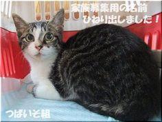 里親さんブログつばいそ組☆家族募集用の名前決定! - http://iyaiyahajimeru.jp/cat/archives/66297