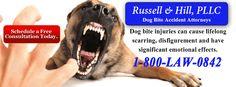 Dog Bite Attorneys