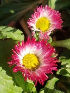 Vårinspirasjon i hagen juledag, mot normalt… Propagation, Garden, Plants, Lawn And Garden, Gardens, Plant, Outdoor, Home Landscaping, Tuin