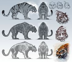 Animal  blueprint model sheet                                                                                                                                                                                 Más