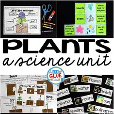 Plants Unit (PowerPoint, Lessons, Printables)