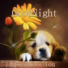 Good Night, God Bless You.
