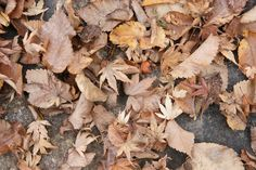 Two background images of brown old dry leaves on the ground - http://www.myfreetextures.com/two-background-images-of-brown-old-dry-leaves-on-the-ground/