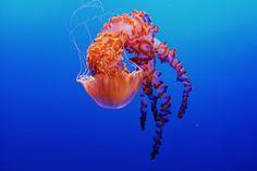 116 Best Underwater Images Underwater Iphone Wallpaper