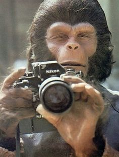 "Roddy McDowall (as ""Cornelius"") with a Nikon F. On the set of ""Planet of the Apes"" 1968 directed by Franklin J. Behind the scenes photos. Pierre Boulle, Science Fiction, Por Tras Das Cameras, Photo Vintage, Planet Of The Apes, Celebrity Portraits, Famous Portraits, Creative Portraits, Home Movies"