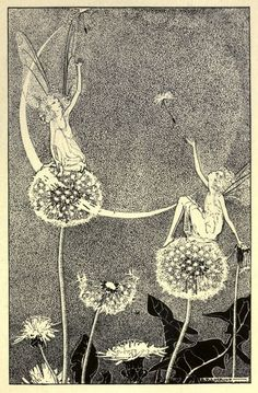 Illustration by Dorothy Lathrop dandelion Taraxacum officinale Asteraceae Art And Illustration, Fairy Tale Illustrations, Photography Illustration, Vintage Illustrations, Abstract Photography, Vintage Fairies, Vintage Art, Fantasy Kunst, Fantasy Art