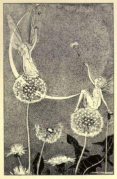 Illustration by Dorothy Lathrop dandelion Taraxacum officinale Asteraceae Art And Illustration, Photography Illustration, Vintage Illustrations, Abstract Photography, Vintage Fairies, Vintage Art, Vintage Images, Arte Inspo, Photocollage