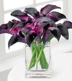 Deep purple calla lillies - leaning towards single type flower bouquet