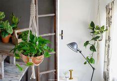 Quanto mais verde, melhor! E se tem uma decoração que a gente tá amando são os suportes para vasos de plantas. Aqui tem inspirações e o passo a passo. ;)