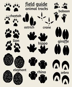 Jungle Nursery Art, features footprints of jungle animals - elephant, giraffe, lion, zebra & more. Also perfect for a safari or zoo nursery or kids bedroom. Zoo Art, Jungle Art, Jungle Safari, Jungle Nursery, Animal Nursery, Nursery Art, Nursery Decor, African Jungle, African Animals