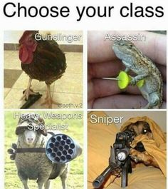 I don't know why, but the thought of an adorable chicken gunslinger or a war-hardened special weapons sheep is amazing. Not to mention lizard assassins are an RPG classic. More memes, funny videos and pics on Funny Gaming Memes, Gamer Humor, Stupid Funny Memes, Funny Animal Memes, Funny Relatable Memes, Funny Games, Funny Animal Pictures, Funny Animals, Hilarious
