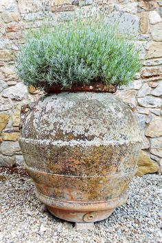 Badia a Coltibuono (Gaiole in Chianti) Garden Urns, Garden Planters, Planter Pots, Balcony Gardening, Container Gardening, Gardening Tips, La Provence France, Leaf Projects, Large Greenhouse