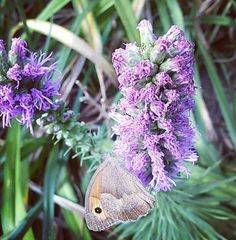 #eko #ogród #patandrub #natura #relaks #ekologicznie #kwiaty #motyl #weekend #przygotowania #lato #zdjęcie #mikro #zdrowie #nature #garden #flowerstagram #healthylifestyle #positivetime