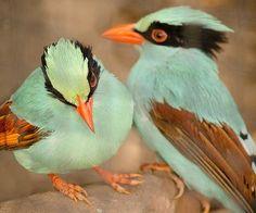Oiseaux vert céladon