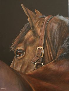 Attentive by Stephanie Greaves, Horse art , equine artist, bay, horse, painting,
