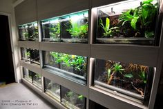 Stunning setup, and the color temperature of the lighting is very very nice Reptile House, Reptile Room, Reptile Cage, Snake Terrarium, Snake Enclosure, Aquarium Shop, Guinea Pig Care, Animal Room, Colorado Homes