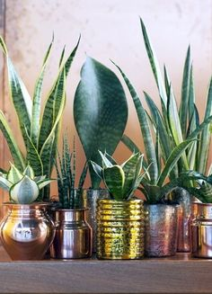 Cacti and succulents are low maintenance, for instance, whereas there are indoor plants that require much more attention and care, so do pay attention to those details when planning and buying your interior design plants inside house ideas! Potted Plants, Indoor Plants, Indoor Garden, Hanging Plants, Indoor Flowers, Plantas Indoor, Mother In Law Tongue, Interior Design Plants, Chlorophytum