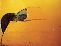 Influenciado pela cultura punk e pelo universo do skate, Flávio Ferraz a.k.a Jey exibe, em telas e painéis, os desenhos que cria nos muros: grandes rostos (ou máscaras) coloridos, com traços geomét…
