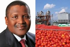 Dangote Too Is Threatening To Stop Tomato Paste Production   Few days after Erisco Foods Limited threatened to shut down its tomato factory Dangote Industries Limited has also disclosed plans to stop tomato paste production because of the harsh operating environment that gives advantage to imported production. Group Vice President of Dangote Industries Limited Alhaji Sani Dangote disclosed that the group recently stopped tomato paste production because of the harsh operating environment that…