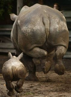 Mother's Day In the Animal World - TRINSI