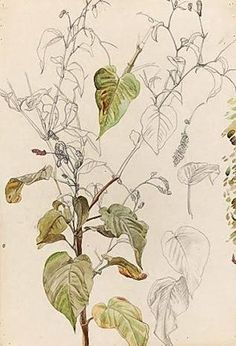lucian freud plant - Google Search