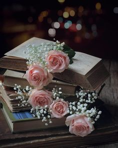 Presents . Flowers Dp, Book Flowers, Flowers Nature, Pretty Flowers, Moonlight Photography, Cute Photography, Book Wallpaper, Flower Phone Wallpaper, Beautiful Flowers Wallpapers