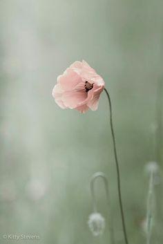 Spring Whisper