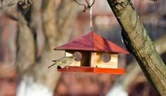 DIY Project: How to Make a Finch Birdhouse