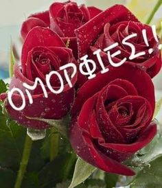 Hugs, Rose, Flowers, Plants, Cards, Gifts, Beautiful, Quotes, Nighty Night