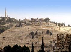O Monte das Oliveiras  Jerusalém a Cidade Sagrada