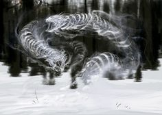 ICE WRAITH - Ice Wraiths are swift, elemental spirits of ice and snow. They move quickly and use powerful frost attacks. Elder Scrolls Oblivion, Elder Scrolls Games, Elder Scrolls V Skyrim, Skyrim Gif, Skyrim Fanart, Skyrim Concept Art, Game Concept, Vampire Masquerade, Video Game Art