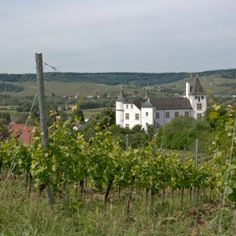 #Reiseblogger unterwegs in Deutschland. Wie wäre es mit einem #Kurzurlaub im einzigen 5 Sterne Hotel im Saarland inkl. Tour durch die Weinberge?