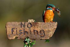 francetv éducation vous propose grâce à la rédaction defrancetv info et à Elodie Drouard, une sélection de photos sur les animaux.