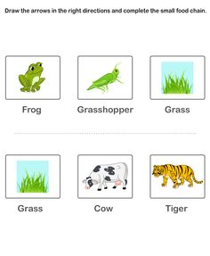 science Worksheets - grade-1 Worksheets - Food Chain Worksheet 13