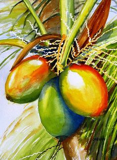 Coconuts watercolor painting by Carlin Blahnik. The smooth skin of coconuts ripening from green to golden display a rainbow of colors. When this outer layer is cut away, the brown furry coconut is revealed. Crack that nut and you are rewarded with coconut milk and meat. http://www.carlinart.com/